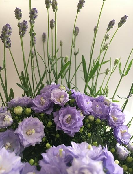 Bell flowers & Lavender